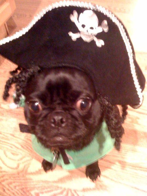 Aaarrr Matey! Pirate Bella-Halloween 2009.